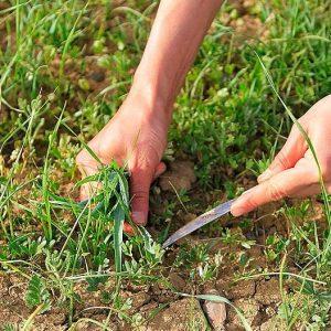 جدا کردن علف هرز از بذر