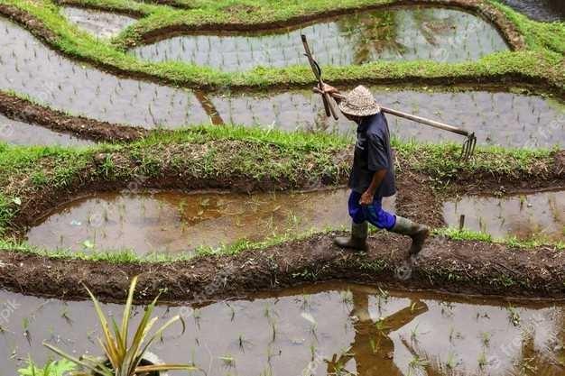 دستگاه بوجاری برنج