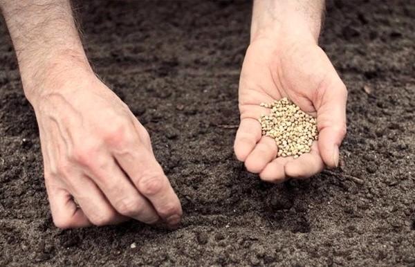 کاشت بذر پلیت شده - آروین صنعت